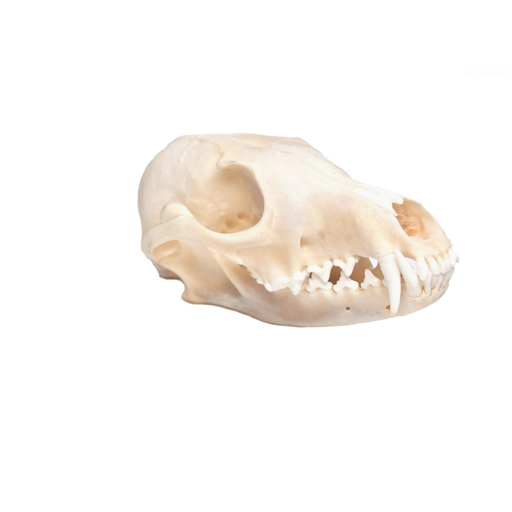 Scathach Costume - American Horror Story Fancy Dress - Scathach Skull
